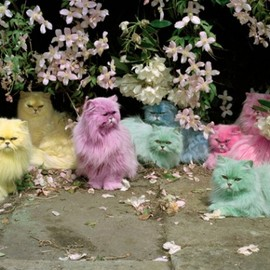 Tim Walker - pastel cats