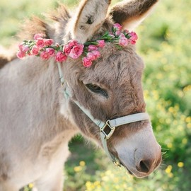 Animals - Flower & Donkey