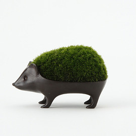 keshiki bonsai hedgehog