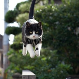 Flying Kitteh
