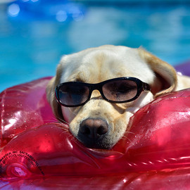 myphotojourney2010 - photograph: Cool Puppy