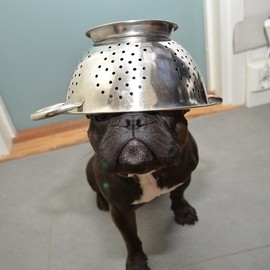 French Bulldog - I come from outer space.