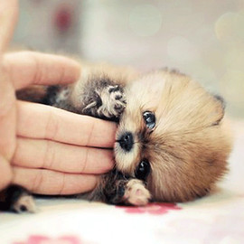 Dog - Cute Puppy