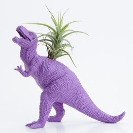 Dorm Room Geekery Decoration - Dinosaur Planter with Air plant- Dorm Room Geekery Decoration
