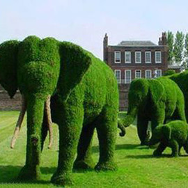 Beautiful Grass Elephants