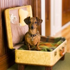 Vintage - Suitcase Fit For A Dachshund!