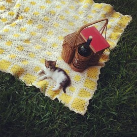 Kitten on a picnic