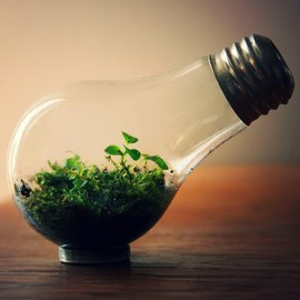 Steamed Glass - Light Bulb Terrarium