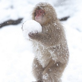 carrying the snowball