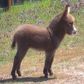 ANIMALS - Lovely Donkey Baby !