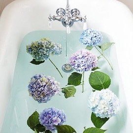 bathing hydrangeas