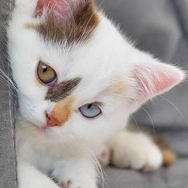 look at the beautiful markings this kitty has <3: