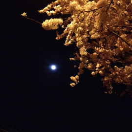 London - Full Moon&Blossoms