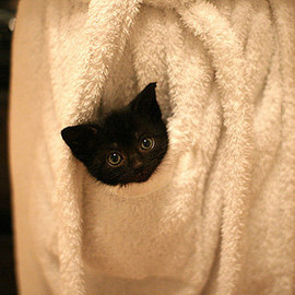 towel cat