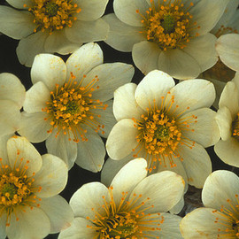 Fine Art America - Detail Of Flowers Print By Nick Norman