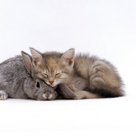 rabbit & kitten