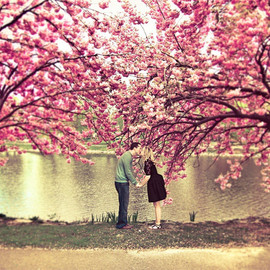 Lovely couple kissing under a cherry blossom tree