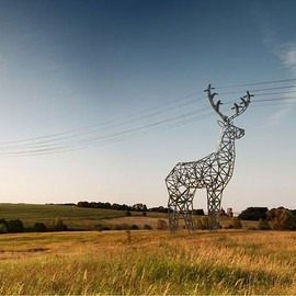 ? - Deer-Power-Line-Towers