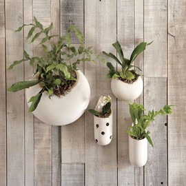 west elm - Shane Powers Ceramic Wall Planters