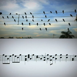 Jarbas Agnelli - Birds on the Wires