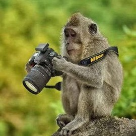that would be me with my new Canon...!
