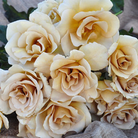 KAWAMOTO ROSE - Eventail d'or