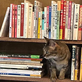 三軒茶屋 - Cat's Meow Books