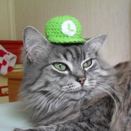 Luigi, Hat For A Cat, Super Mario Crochet Cat Costume