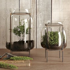 west elm - Glass Terrariums
