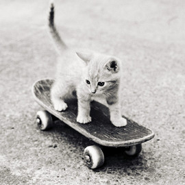 Kitten on the Board