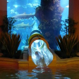 Las Vegas - Aquarium Slide at Golden Nugget