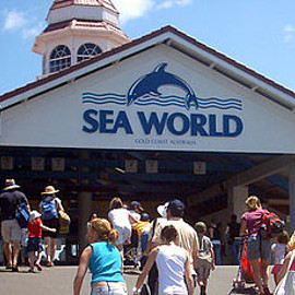 オーストラリア - Sea world australia