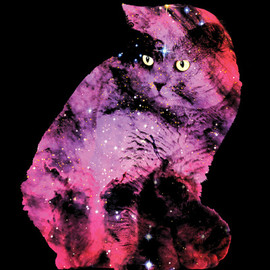 Zippora Lux - Celestial Cat - The British Shorthair & The Pelican Nebula Stretched Canvas