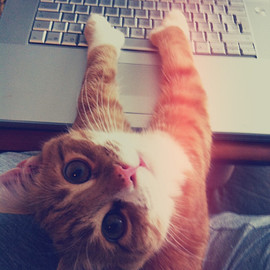 ginger - cat typing