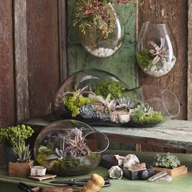 Roost Recycled Glass Bubble Terrariums - Large