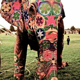 flower painted elephant
