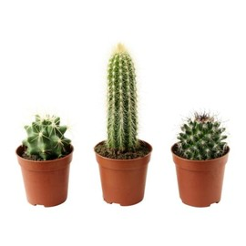 IKEA - CACTACEAE Potted plant