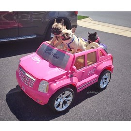 French Bulldog - Pink Cadillac