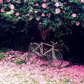 {places : beneath the camellia blossoms} by {this is glamorous},...give me spring please