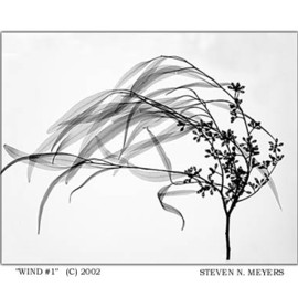 Steven N. Meyers - WIND #1 2002