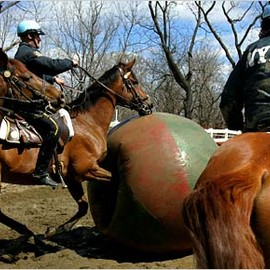 Career Opportunities - Police Horse of New York Police department