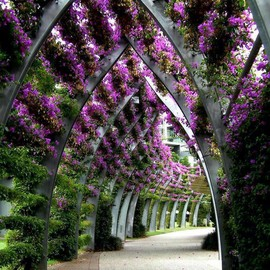 Queensland, Australia - South Bank Parklands