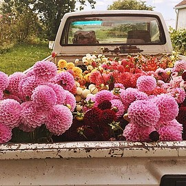 Our kind of flower bed