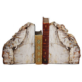 the evolution store - petrified wood bookend
