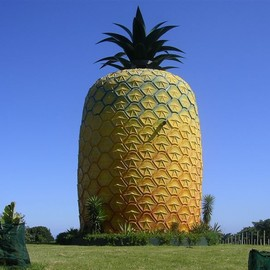 Summerhill Farm / Bathurst, South Africa - The Big Pineapple