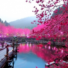 Taiwan's Formosan Aboriginal Culture Village - Dazzling Cherry Blossom Trees Light Up at Night(満開の桜のライトアップ)