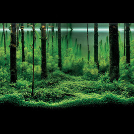 AQUEA FOREST AQUARIUM - Mr. Pavel Bautin