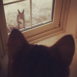 cat&squirrel - hello!