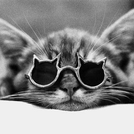 猫 - cat with cat sunglasses