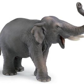 Schleich - Indian Elephant Male
